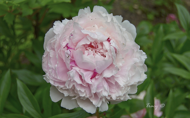 Joanies Garden Flower Gallery